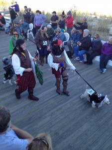 piratesdogs